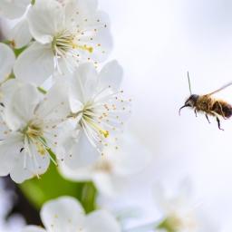 The Honeybee Homemaker